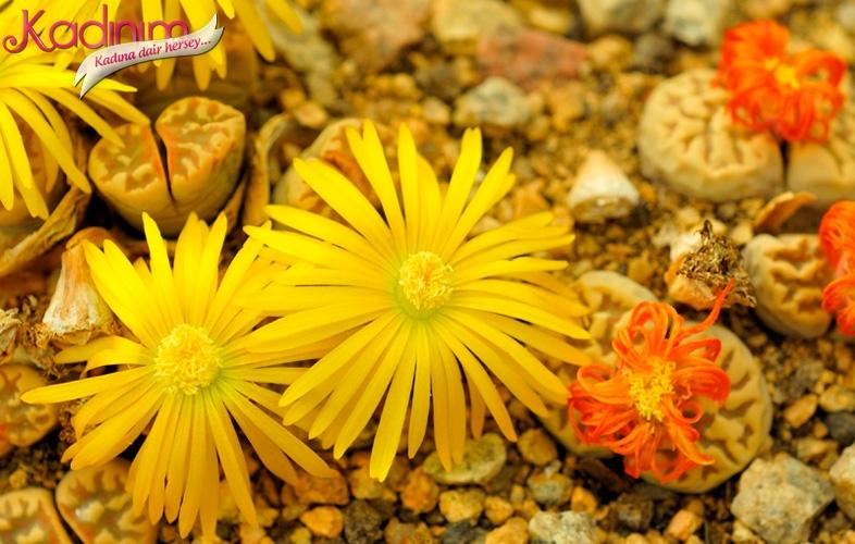 Çiçek bakımı nasıl yapılır
